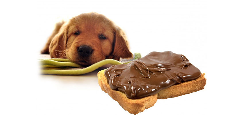 çikolata-köpeği-öldürürmü-cahil.co