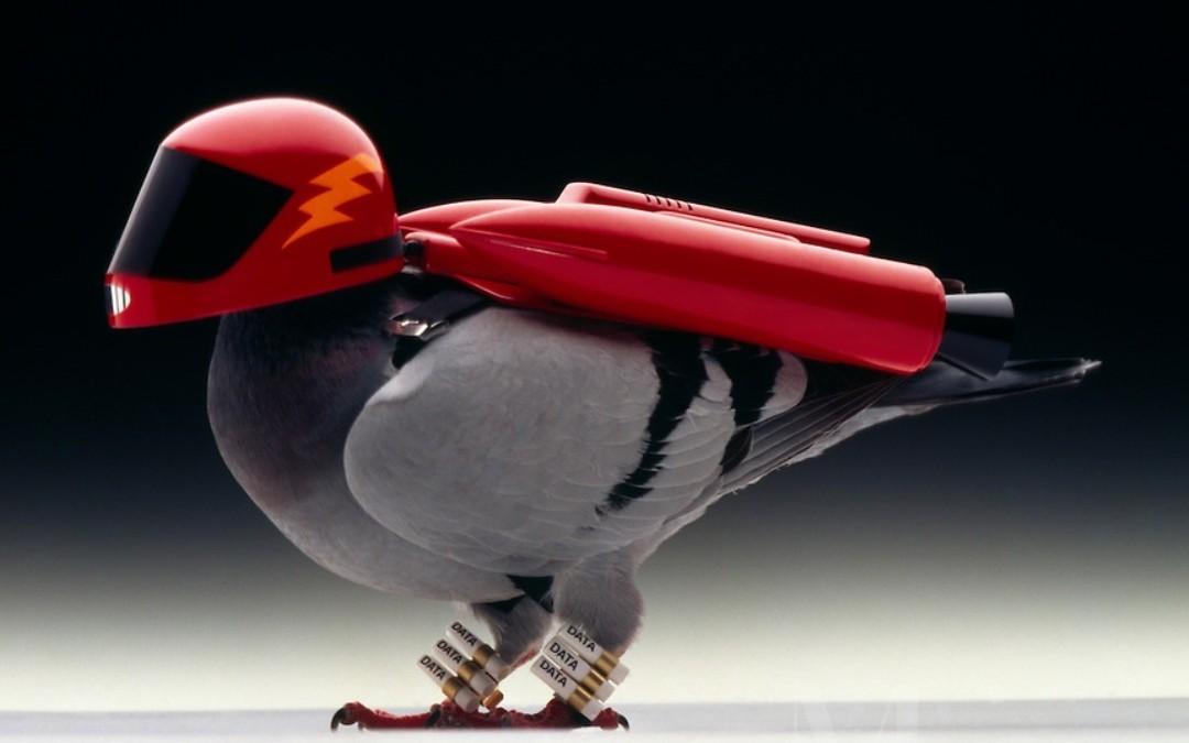 posta-güvercinleri-cahil.co