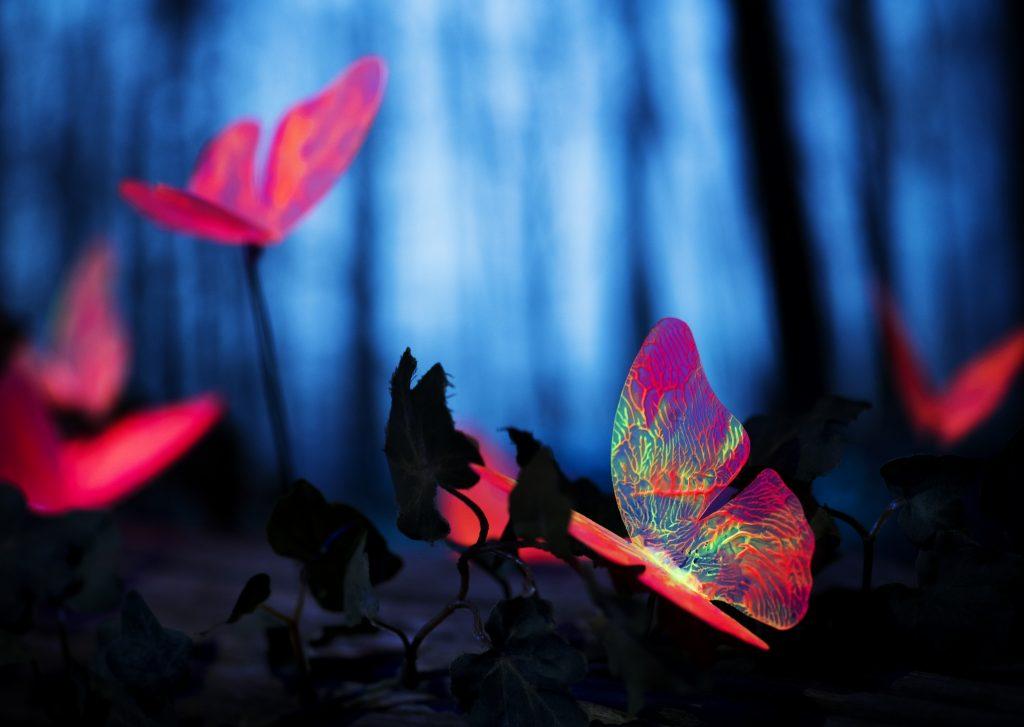 kelebek-etkisi-nedir-cahil.co